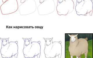 Поэтапное рисование овечки для детей. Как нарисовать барашка