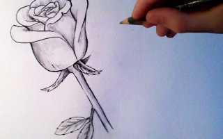 Как нарисовать розу в вазе карандашом поэтапно. Как нарисовать розу карандашом легко