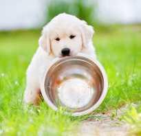 Чем нельзя кормить собаку: подробный обзор. Чем можно кормить маленьких щенков, можно ли им сырое мясо. Кормление щенков до года: можно ли им давать молоко, овощи и сыр