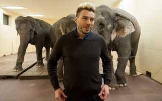 Цирк: животные для развлечений. Дрессировщик Андрей Дементьев-Корнилов: «Мы учим слонов не бояться публики