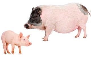 Изгнание легиона бесов в стадо свиней. Психология евангельской притчи о стаде свиней