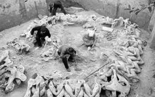 Когда появился кроманьонец. Древний человек кроманьонец – характеристика образа жизни, орудия труда, интересные факты с фото и видео