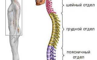 Вытянутое тело. Как вытянуться в росте в домашних условиях. Вытяжение позвоночника лежа