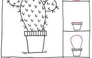 Как нарисовать красивый кактус. Как нарисовать кактусы: разные изображения, поэтапно