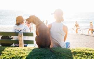Какой должна быть нормальная температура у собак и что делать, если она отличается от нормы. Какой должна быть нормальная температура у собак крупных пород? Подробные данные