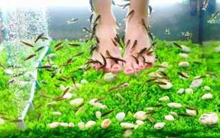 Рыбки которые едят мертвую кожу. Пилинг ног рыбками. Лечение рыбками Гарра Руфа кожных заболеваний