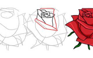 Как нарисовать цветы розы. Как нарисовать бутон розы карандашом поэтапно? Компоновка и форма