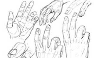 Руки карандашом для начинающих. Учимся рисовать руку человека