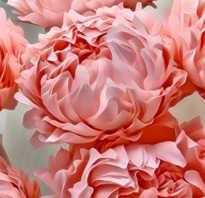 Большие цветы из гофрированной бумаги: впечатляющий декор интерьеров и фотозон. Гигантские ростовые цветы из фоамирана: интерьерная роза