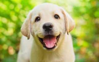 Необычные клички для собак со смыслом. Самые прикольные и забавные клички для собак. Имена для маленьких собак — подборка лучших кличек для миниатюрных питомцев