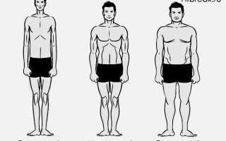 Атлетический тип телосложения у женщин. Как точно определить тип телосложения мужчин и что это дает