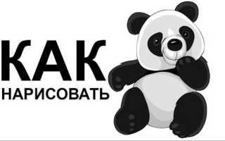 Рисунки животных карандашом поэтапно панда. Как нарисовать панду из мультика карандашом? Как нарисовать панду карандашом