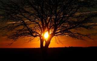 Будьте всегда в настроении. Сочинение на тему «кавказский пленник» жилин и костылин