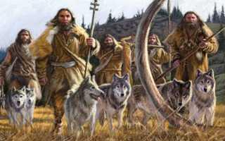 Волк и собака. Изучение предков помогает лучше понять потомков. Отличие волков от собак