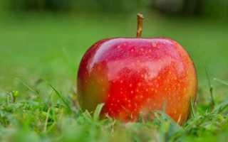 И а бунин антоновские яблоки проблемы. Анализ рассказа «Антоновские яблоки» Бунина И
