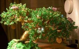 Как самостоятельно сделать дерево из бисера. Деревья из бисера – декор, достойный фараонов (20 фото). Мастер-класс по плетению денежного дерева из бисера, видео