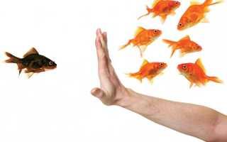 Примеры проявления толерантности. Что значит толерантный человек? Качества толерантного человека