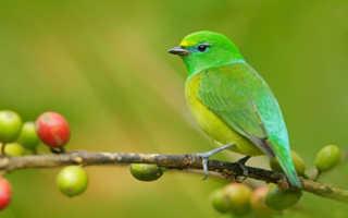 Толкование снов птица, сон птица, приснилось птица. К чему снятся птицы? Сонник: птицы, птицы во сне — полное толкование