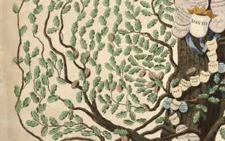 Программа фэмили древо семейное. Как создать генеалогическое древо в Family Tree Builder. Сравнение программы Family Tree Builder с платным аналогом Family Tree Maker