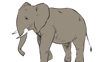 Рисуем слона. Как нарисовать слона карандашом поэтапно Как нарисовать слоника карандашом поэтапно