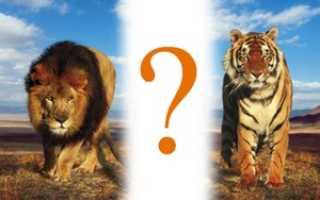 Фантастическая дружба льва, медведя и тигра покорила весь мир! Невероятная история! Необыкновенная дружба льва тигра и медведя Лев медведь и тигр дружат 12 лет